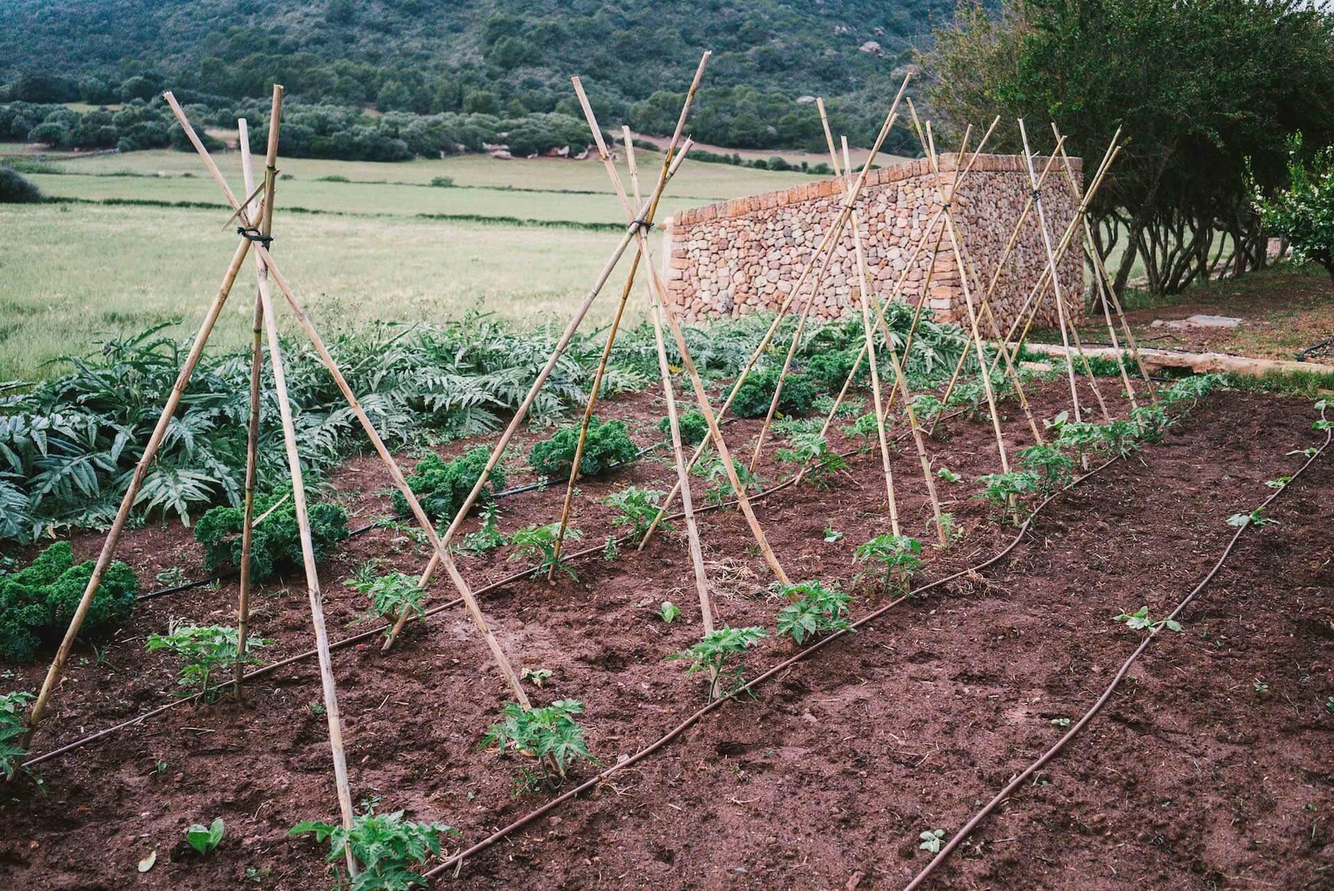 Organic vegetable garden in Son Felip